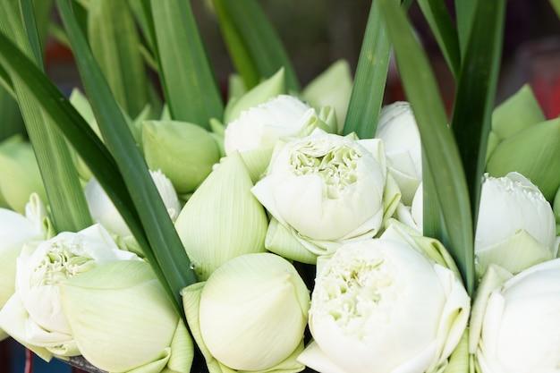 Красиво расположенные белые цветы лотоса на продажу