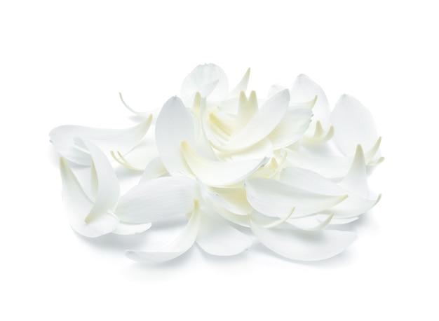 白い背景に白い蓮の花びらの分離