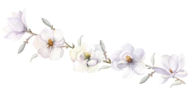 White magnolia flower handdrawn watercolor illustration
