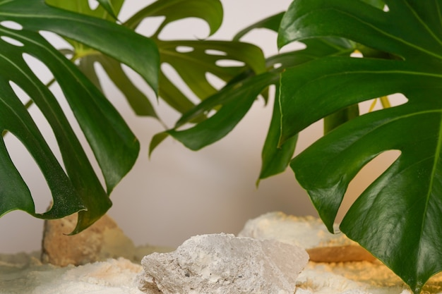 White marble product display podium with nature leaves.