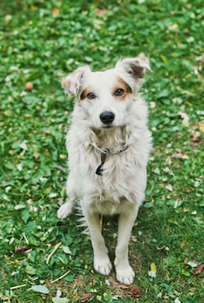 緑の草の上の白い雑種ホームレス犬ホームレスの動物の保護の日