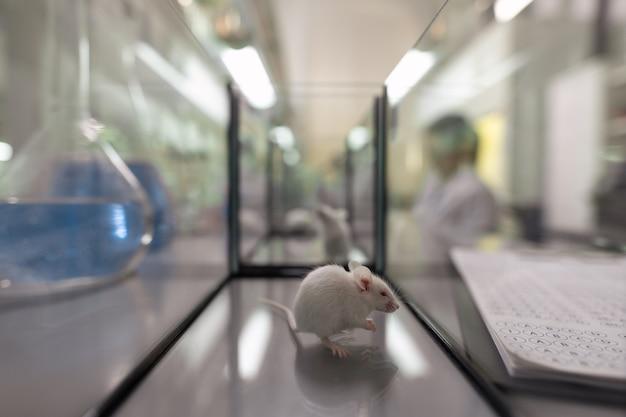 Белая мышь сидит внутри стеклянного контейнера, стоящего между трубками и документами в научной лаборатории