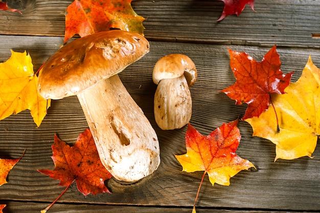 White mushroom. ãâ¡ep