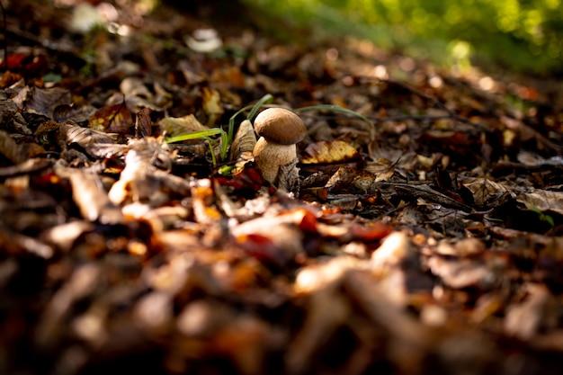 森の中で白いキノコ