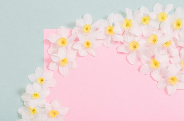 Белый нарцисс на поверхности розовой и зеленой бумаги