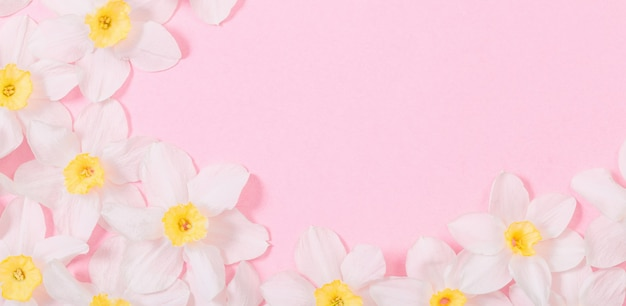 Белый нарцисс на поверхности розовой бумаги