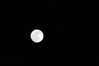 White night moon wolf pretty