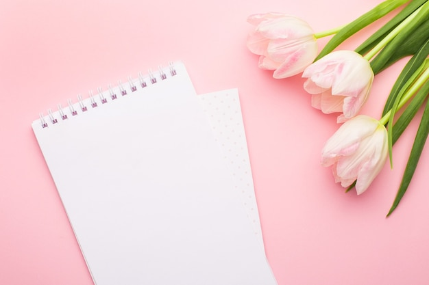White notebook and spring flower pink tulips on the pink