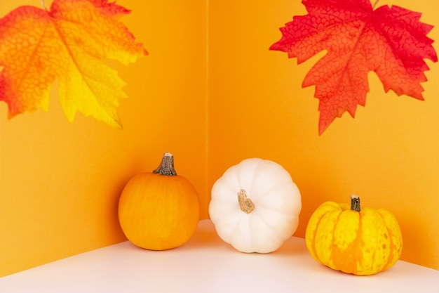 White and orange heirloom pumpkins next to wall with foliage