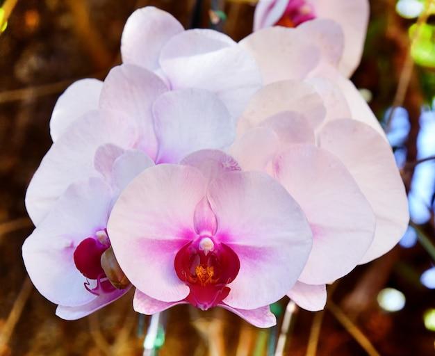 백색 난초 꽃 brauty 자연 배경 흐림