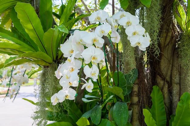白い蘭の花が木にぶら下がっている