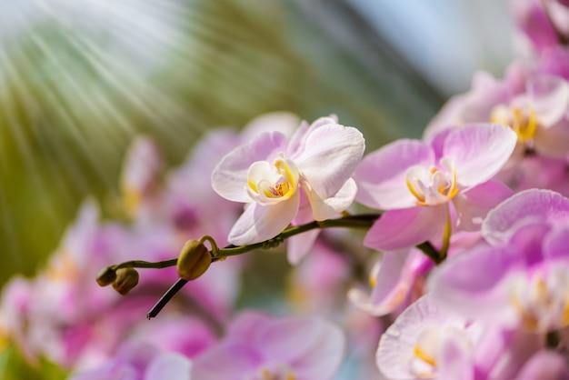 木の上に白い蘭の花