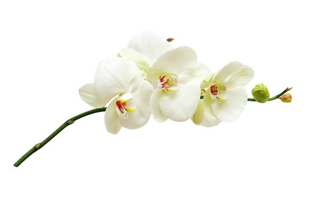 흰 난초 꽃