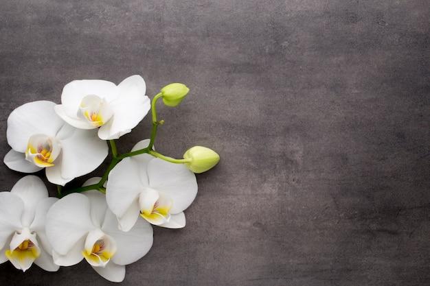 灰色の背景に白い蘭。