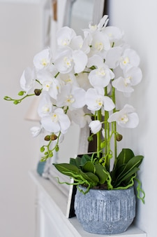 White orchid in a pot on the fireplace.