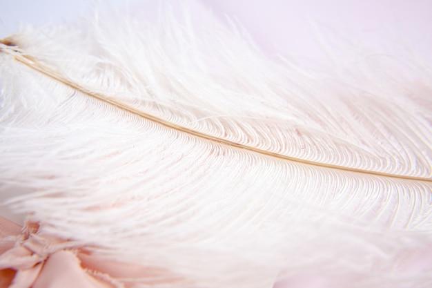 Белое перо страуса на розовом фоне. поздравительная открытка ко дню матери. день святого валентина. скопируйте пространство.