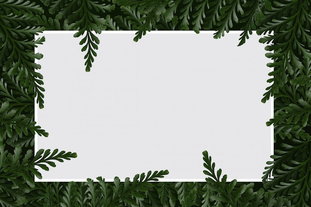White paper blank brochure fern isolated white background.