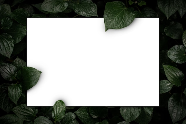 White paper card on green leaves top view background creative layout in nature concept