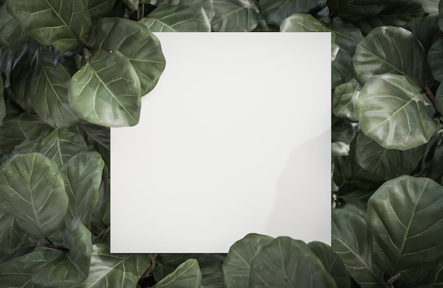 熱帯緑の葉の背景に関するホワイトペーパー