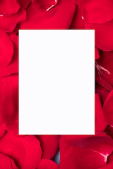 White paper on red rose petals copy space
