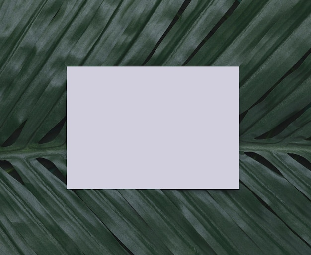 White paper on tropical leaf copy space