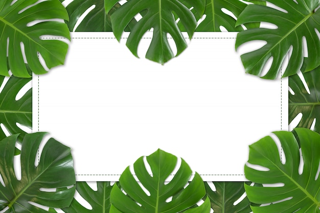 White paper with monstera leaves frame on white background isolated