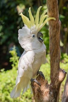 Белый попугай на ветке дерева