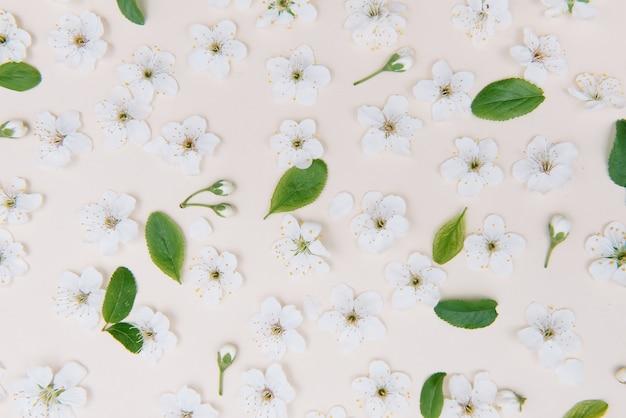 색상 표면에 흰색 파스텔 봄 꽃