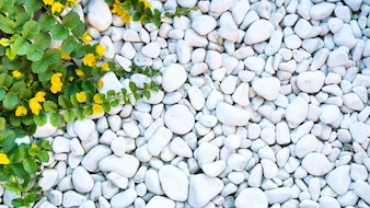 White pebble and a green weaving plant like a frame