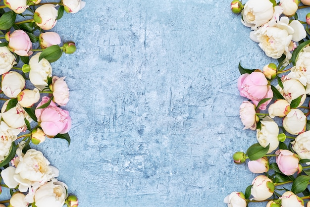 White peonies border on blue frame background