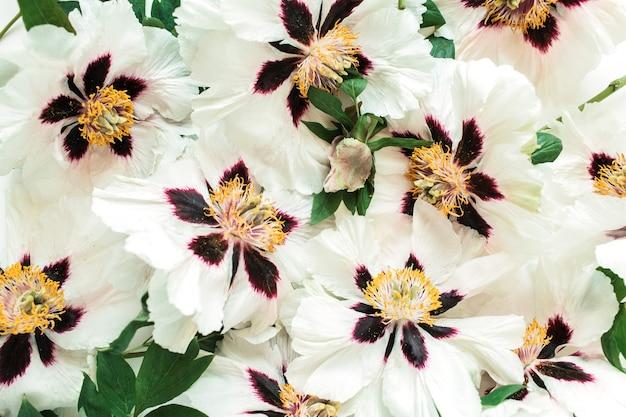 흰 모란 꽃 패턴입니다. 꽃 봉오리 구성.