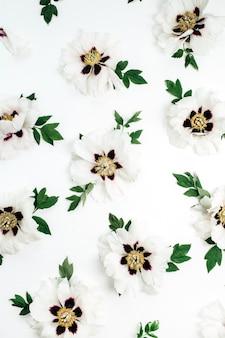 Узор цветы белые пионы на белой поверхности
