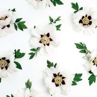 White peonies flowers pattern on white background. flat lay, top view