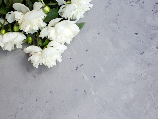 White peonies on gray stone background, copy space for your text top view and flat lay style.