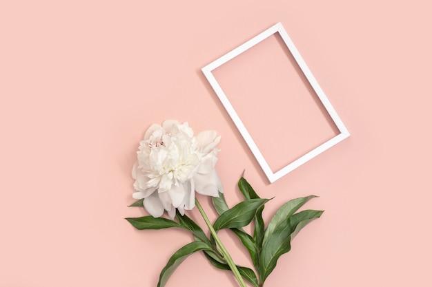Белый пион и рамка для текста на розовом фоне и копией пространства. приглашения или поздравления с праздником.
