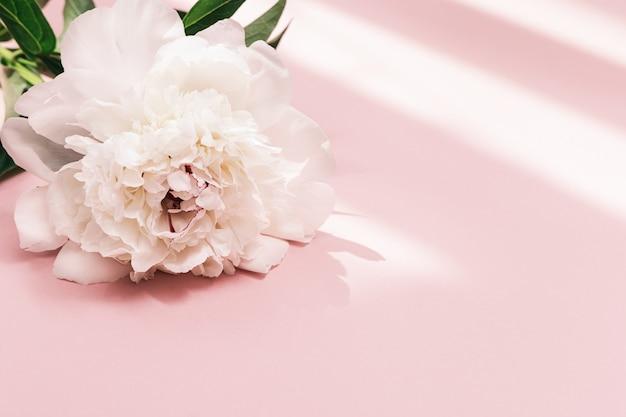 흰 모란 꽃과 햇빛 여름 꽃이 만발한 섬세한 모란 계절 꽃 무늬 카드