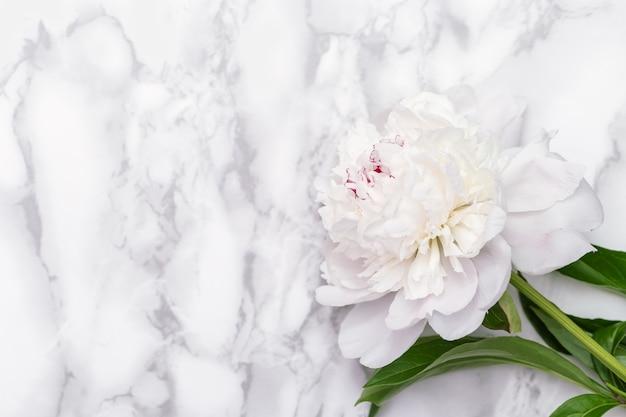 大理石の背景に白い牡丹の花。母の日、女性の日、結婚式の招待状のポストカード。