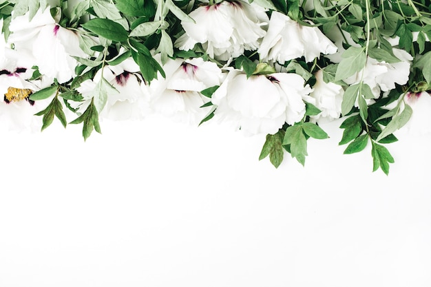 Белые цветы пиона на белой поверхности
