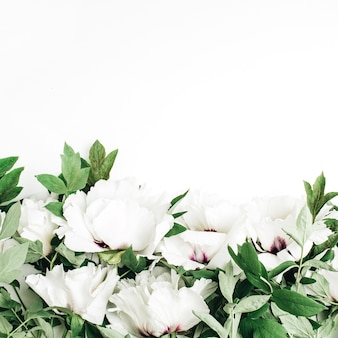 White peony flowers on white background. flat lay, top view