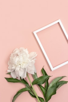 White peony and frame on pink