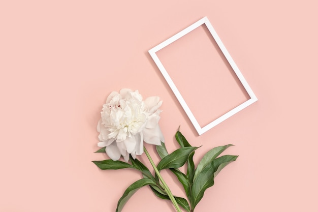 White peony and frame for text on pink background and copy space. invitations or holiday greetings.