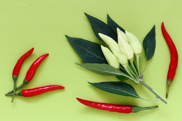 White pepper branch and chili peppers on a light green background