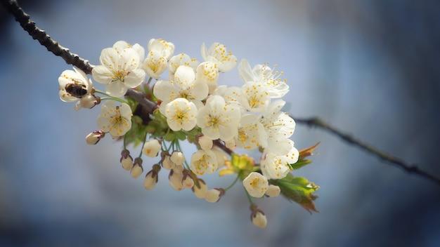선택적 초점에 흰 꽃잎 꽃