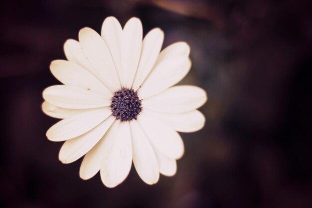 White petals flower