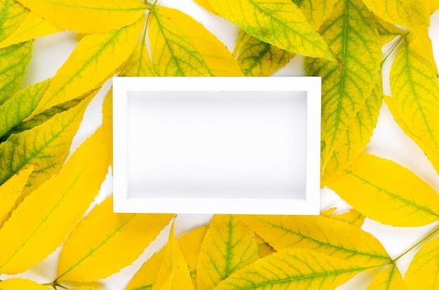 White photo frame with yellow leaves on white surface