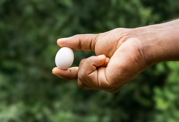 White pigeon egg on a male hand close up view on soft bokeh background