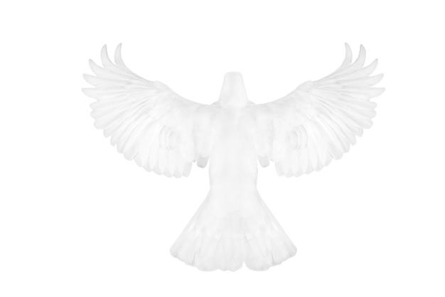 Белый голубь, летящий на белом фоне