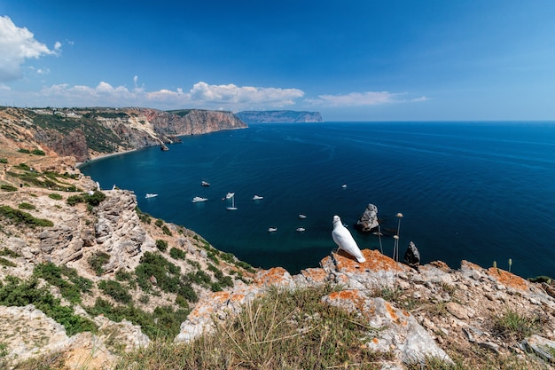 海の上の岩の上に立っている白い鳩。結婚式のコンセプト。背景にヨットがある美しい海の景色。