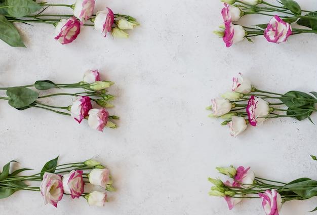 白地に白ピンクのトルコギキョウの花。受胎祝日、3月8日、母の日。水平方向の画像、フラットレイアウト、コピースペース