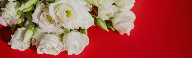 Белый розовые цветы эустомы на красной поверхности в винтажном стиле. вид сверху. белый цветок лизиантуса. формат баннера для поздравления свадебные пригласительные билеты. копирование пространства